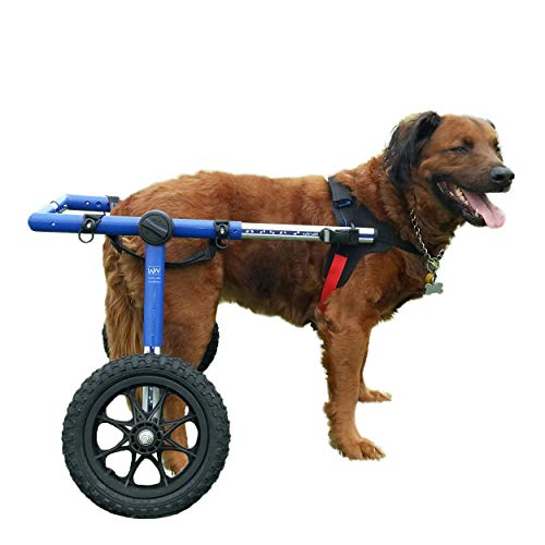 The Best Dog Wheelchairs For Small, Medium, & Large Breeds Reviewed (2020) 2