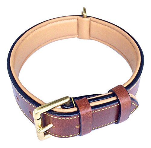 What's The Best Leather Dog Collar On The Market? (2020) 1