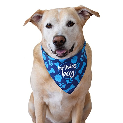 The Best Bandanas For Dogs - An In-Depth Guide 33