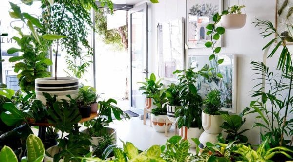 a living room filled with indoor tropical plants