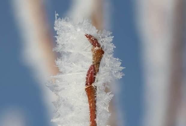 Eiskristalle an Pflanze