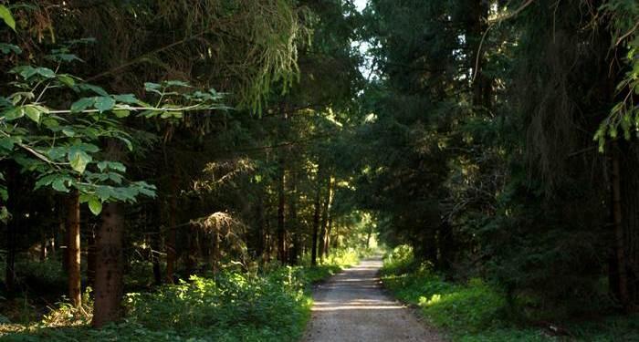Wald Mühldorfer Hart