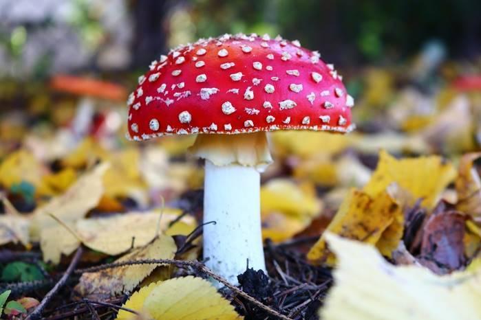 Herbstzeit ist Wohlfühlzeit-Kneipp-Herbstneuheiten