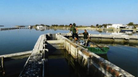 spec Comacchio-4-pesca 4