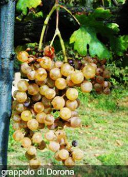 vino dorona venezia 2