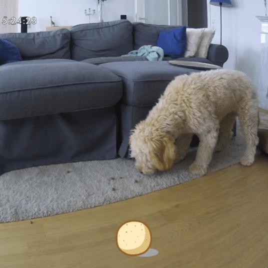 Furbo Hundekamera