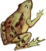 frogprince-gobel-1913