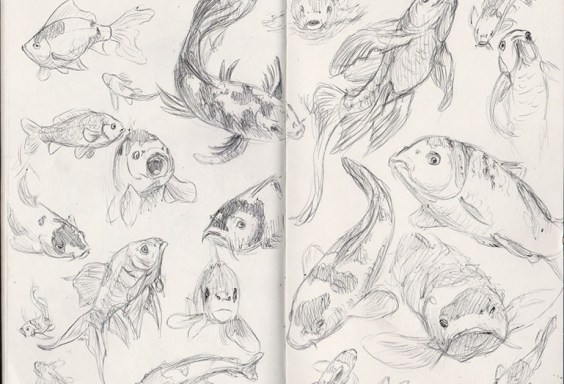 koi sketches