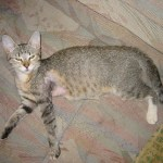 Grum, her wound healed, but her leg still not in full use yet.