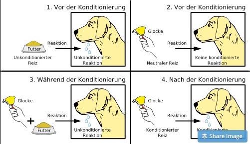 Schema der klassischen Konditionierung am Beispiel des Pawlowschen Hundes.
