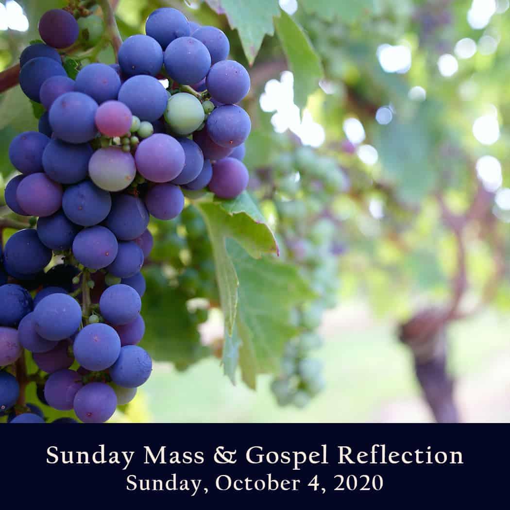 Sunday Mass And Gospel Reflection Sunday October 4
