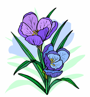 Blue Crocus
