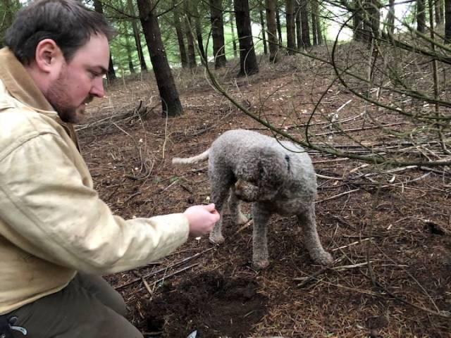 Will work for kielbasa: Ella is rewarded for finding white truffles.