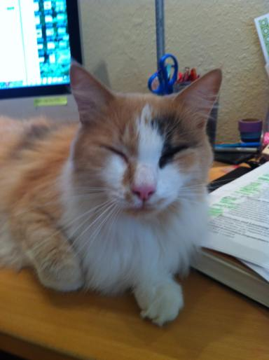 "Oliver says, ""Can I help you study? I has a smart."""
