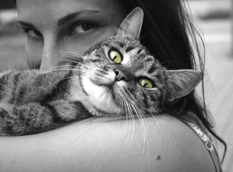 cat cuddkle