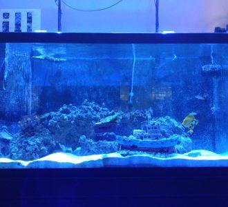 Episode 16: Marine Biology and Climate Change with Dr. Jordan Grigor