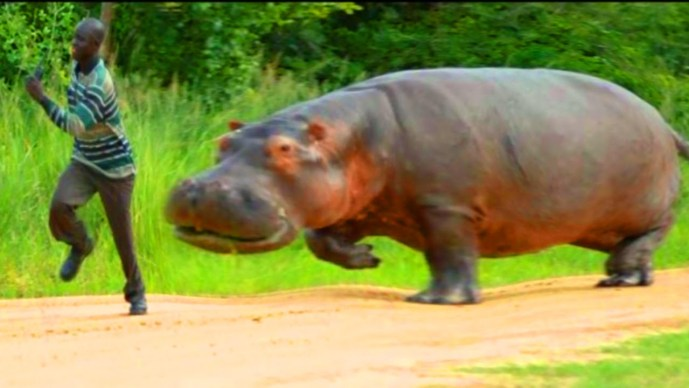hippopatemus-worlds-most-dangerous-animal