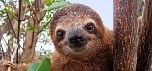 sloth4_full
