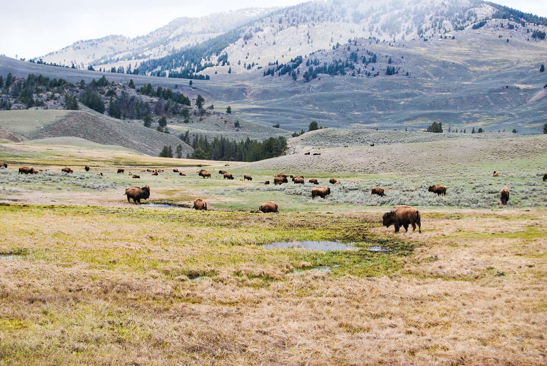 narodni park yellowstone