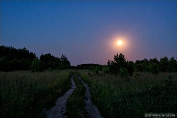Ночь в лесу — фото