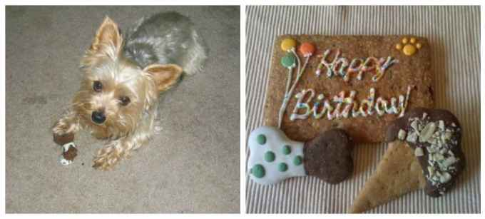 """Treat your dog to fabulous Birthday Celebrations with Milo's Kitchen. Nothing says """"I love you"""" more thandelicious, all natural, 100% meatdog treats and a few fun new toys too! 