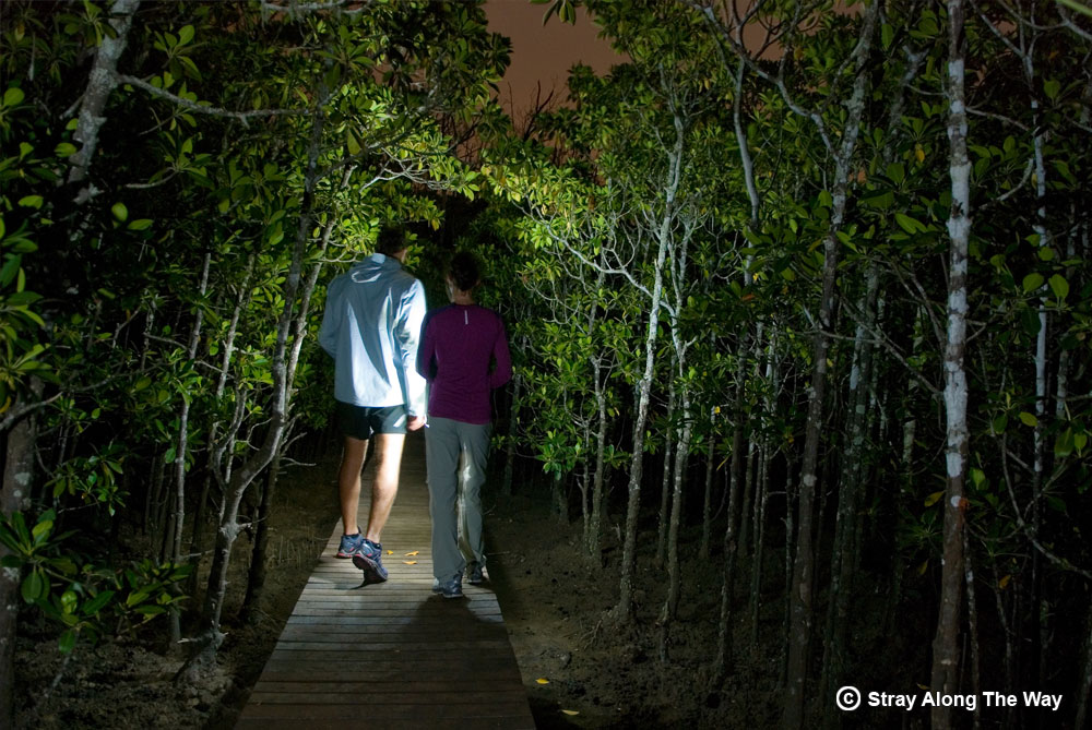 Exploring the mangrove forest on the banks of the Umlalazi River