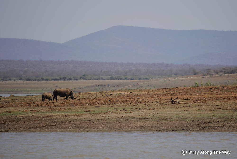 Rhinos on Pongola Game Reserve Jozini Dam