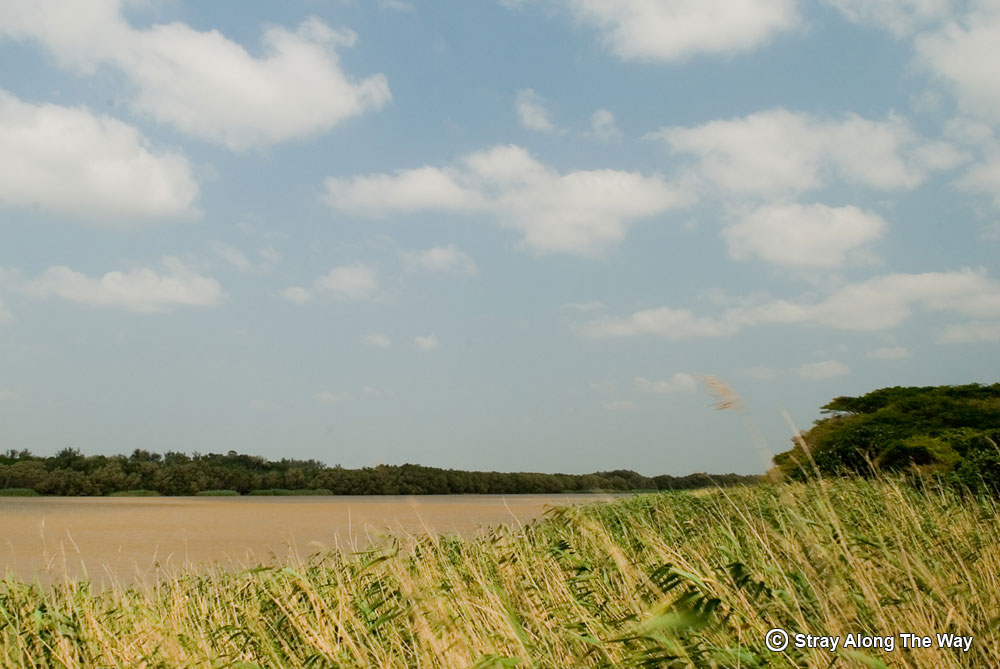 Lake St Lucia estuary on of the many things to do in St Lucia
