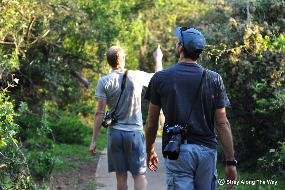 Exploring the iSimangaliso Wetland Park is one of the things to do in St Lucia