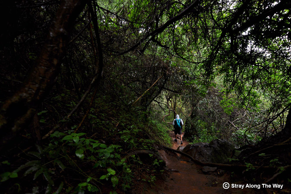 In the forest on the Fanie Botha Hiking Trail