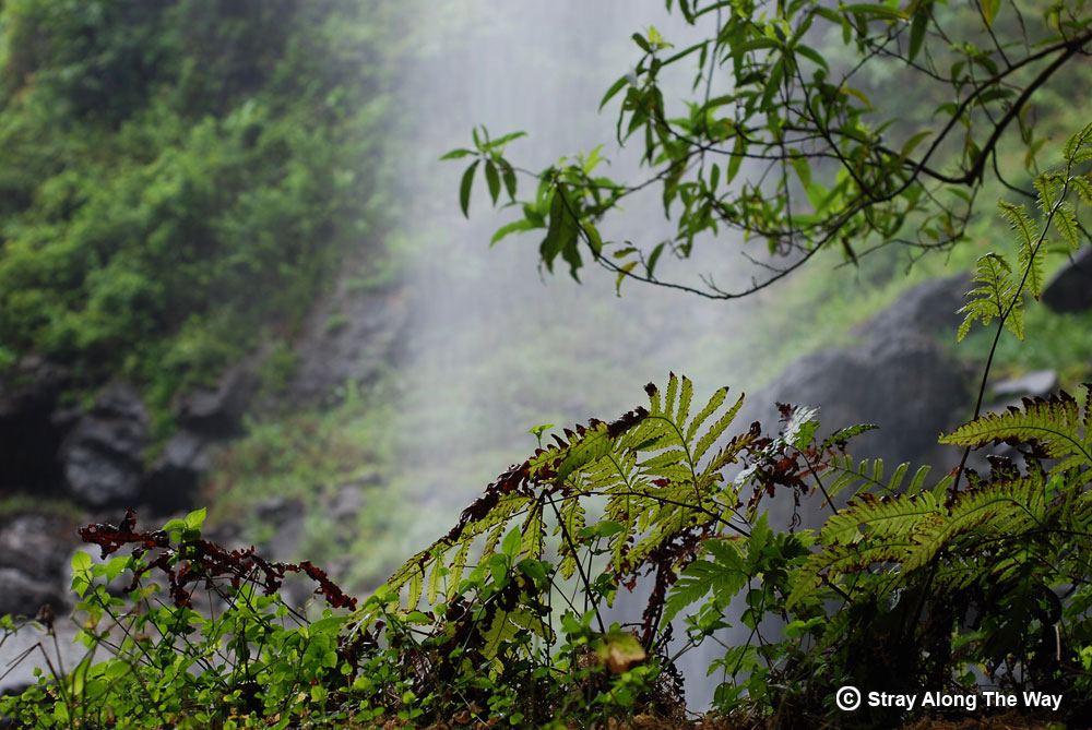 Lush vegetation growing in the spray from Bridal Veil Falls