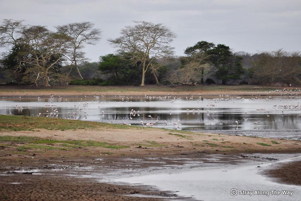 Nyamiti Pan in Ndumo Game Reserve