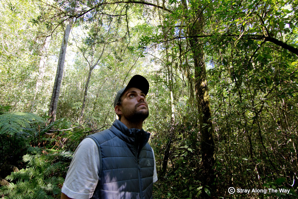 Bevan in the Knysna Forest