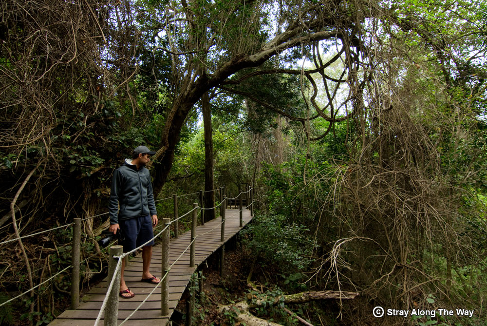 Storms River coastal forest