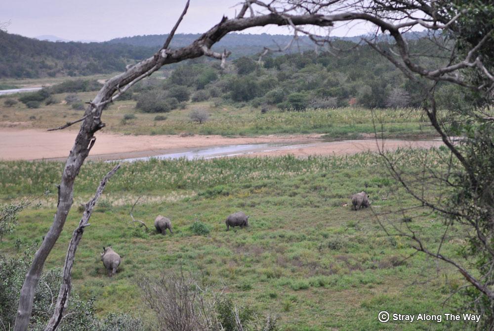 white rhinos wilderness trail