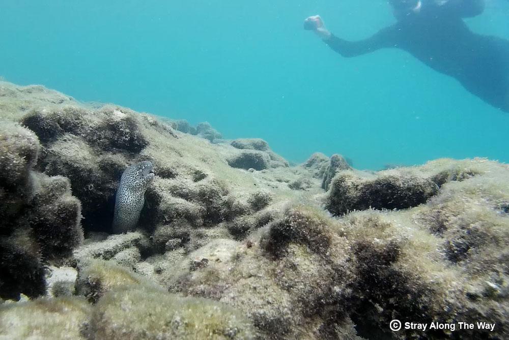 Snorkeling the Kosi Mouth Aquarium