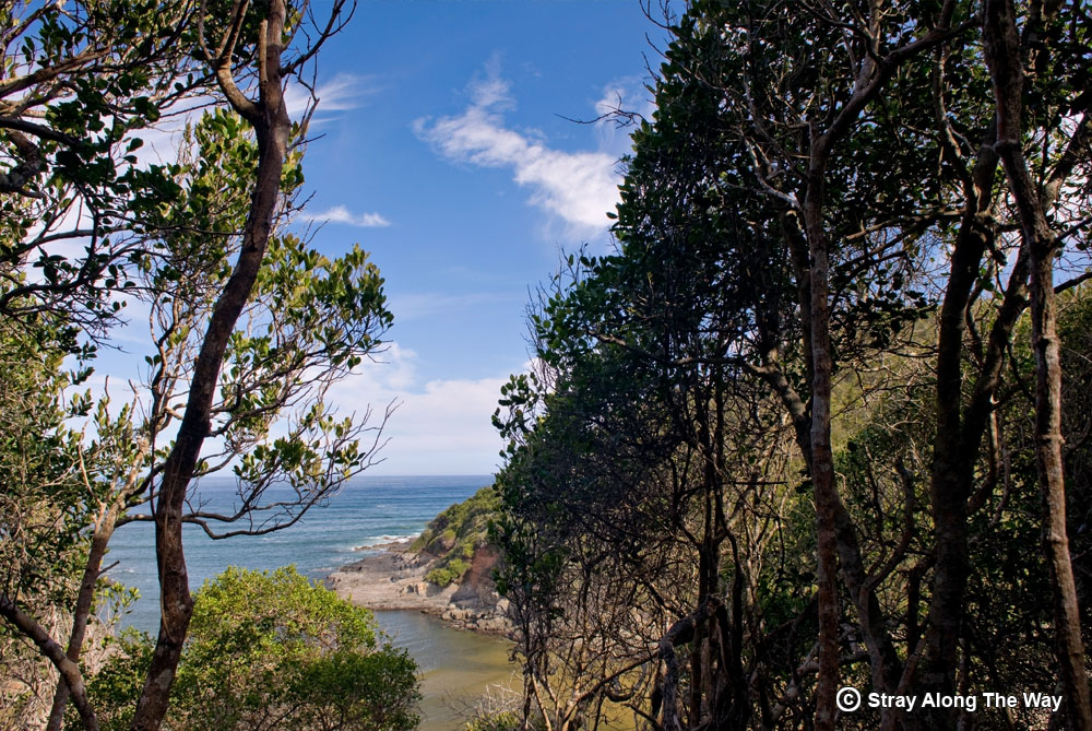 A view of the Salt River Mouth from the forest. Garden Route.