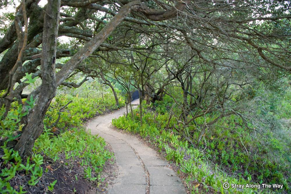 Shady pathways through the coastal forest.