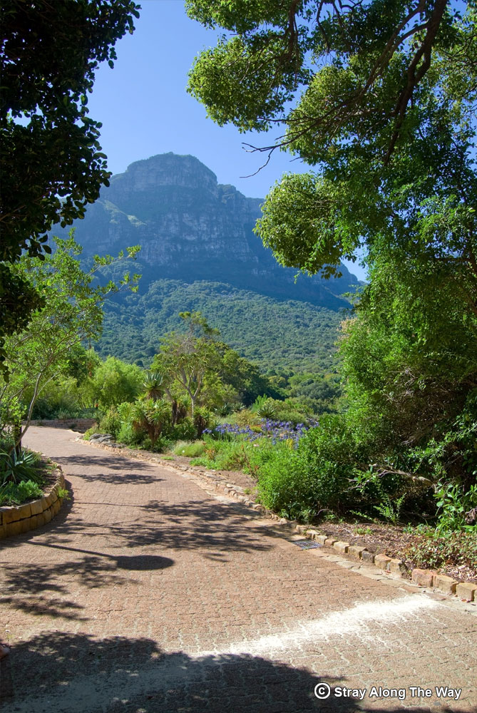 Kirstenbosch National Botanical Garden view