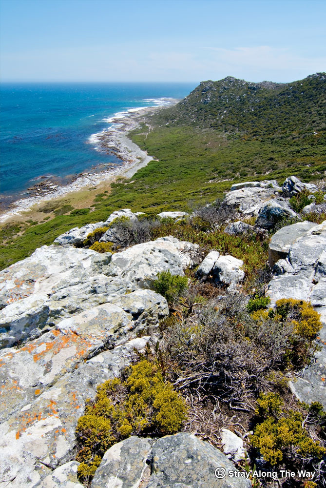 atlantic views cape point nature reserve