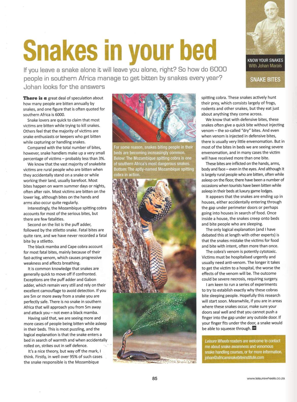 mozambique-spitting-cobra-article