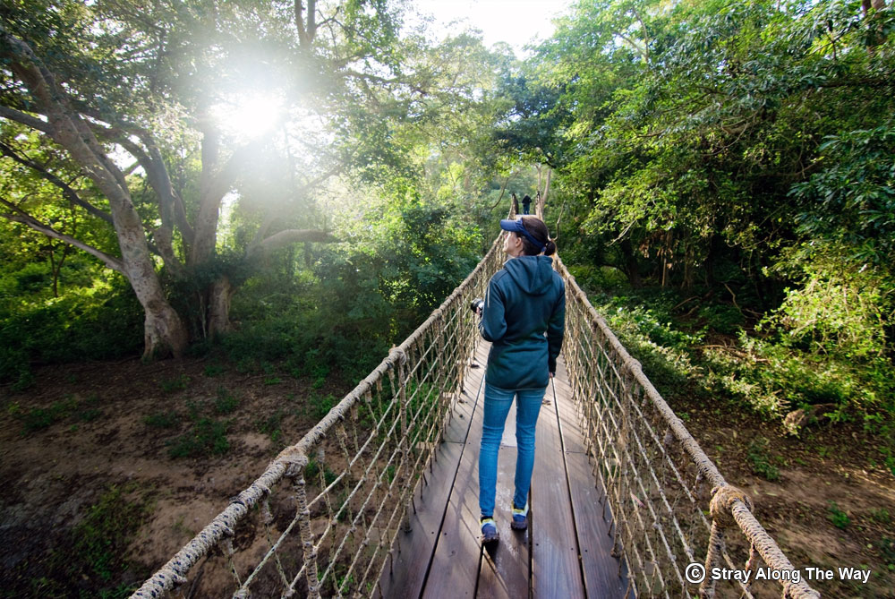 jill mkhuze fig forest bridge