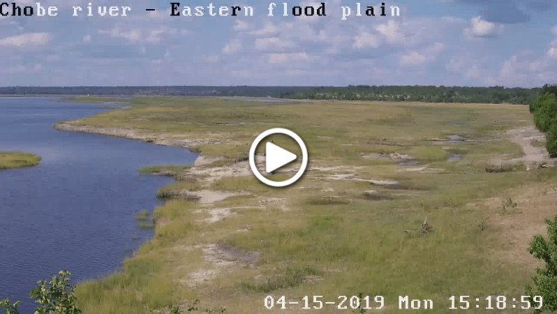 chobe bush webcam