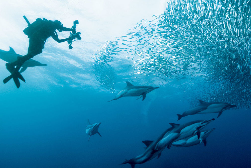 wildlife-experience-Sardine-Run-Dive-the-Big-5