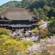 "photo of Kiyomizu temple with Cherry Blossom ""Sakura"""