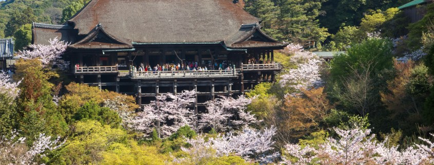 "photo of Kiyomizu temple with Cherry Blossom ""Sakura"""