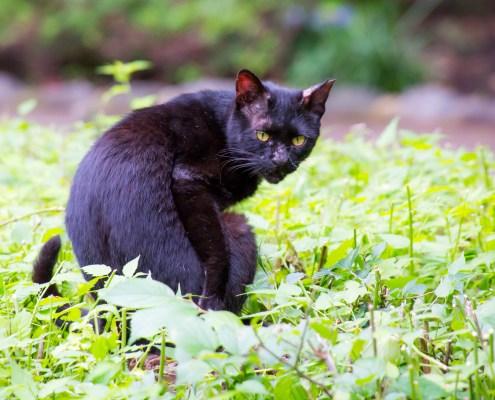 Cat looks back @ Tokyo Ueno park. 上野公園の猫。植木の上で振り返る。 28-300mm F/3.5-6.3 Di VC PZD (Model A010) にて撮影。