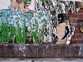 kid_acne_hoods_and_flowers.jpg