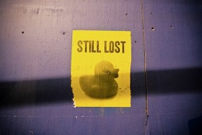 still_lost_duck.jpg