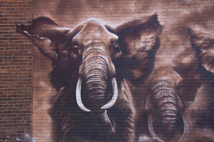 Elephant Stampede – Street Art in Canada